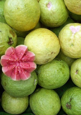 Real Seed Guava Thai Hybrid Imported Seed(50 per packet)