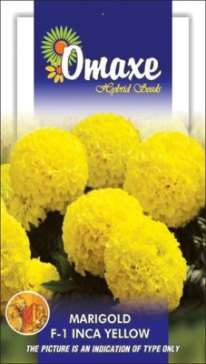 Omaxe MARIGOLD F1 INCA YELLOW WINTER FLOWER 10 SEEDS PACK BY OMAXE Seed