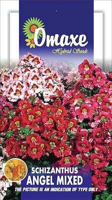 Omaxe SCHIZANTHUS ANGEL MIXED 40 SEEDS PACK Seed