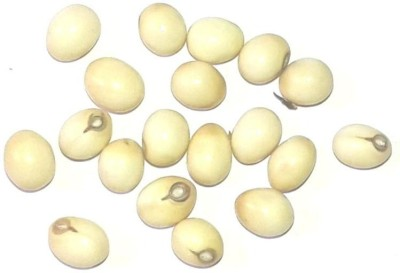 Seedbazaar White Rosary Pea (Abrus precatorius), Sweta Gunja Seed