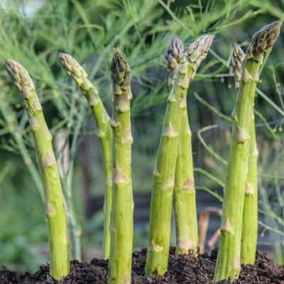 Soil Me Asparagus Seed