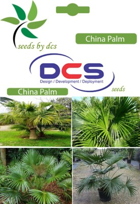 DCS China Palm Forest Plants (10 Seeds Per Pack) Seed