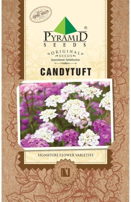 PYRAMID SEEDS Candytuft Seed