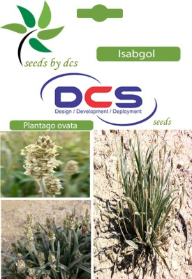 DCS Isabgol Forest Plant (5g Seeds Per Pack) Seed