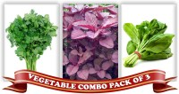Real Seed Vegetable Combo Pack - Coriander, Red Spinach Amarnath, Green Spinach F1 Hybrid Seeds Seed(3 Per Packet)