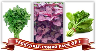 Real Seed Vegetable Combo Pack - Coriander, Red Spinach Amarnath, Green Spinach F1 Hybrid Seeds Seed
