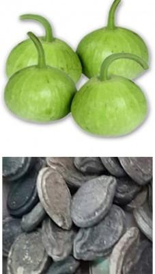 Alkarty tinda-round-gourd-seed Seed