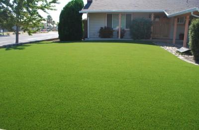 Nelesa Gardening Lawn Grass 1000 Seeds Pack Seed