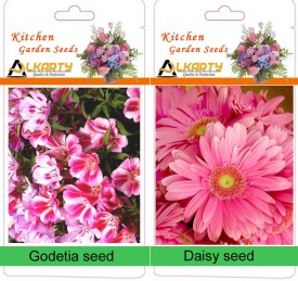 Alkarty Godetia and Daisy winter flower seed Seed(20 per packet)