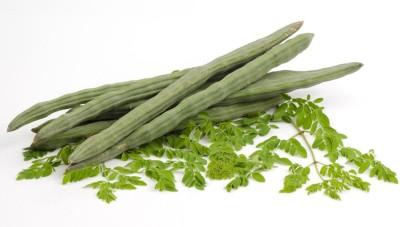 SeedFactory Moringa Oleifera - Drumstick Tree Seed