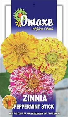 Omaxe ZINNIA PEPPERMINT STICK SUMMER FLOWER SEEDS-AVG 40/50+ SEEDS BY OMAXE Seed