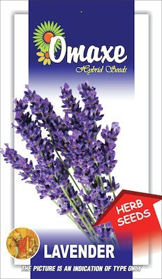 Omaxe LAVENDER IMPORTED 30/40 SEEDS BY OMAXE Seed