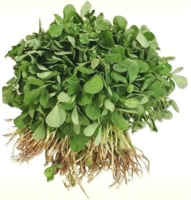 Divine Tree Methi Vegetable Seed