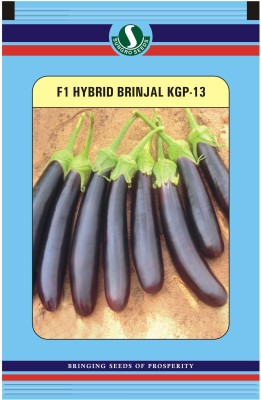Sungro Seeds Limited Hybrid Brinjal Long Seeds (Pack of two) Seed