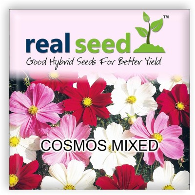 Real Seed Cosmos Mixed Hybrid Imported Flower Seeds Seed