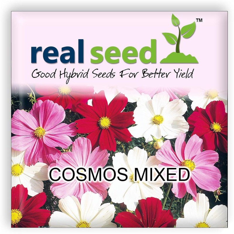 Real Seed Cosmos Mixed Hybrid Imported Flower Seeds Seed(20 per packet)