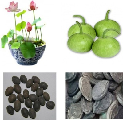 Alkarty lotus seed and round gourd seeed Seed