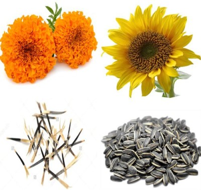Alkarty marigold and sunflower seed Seed