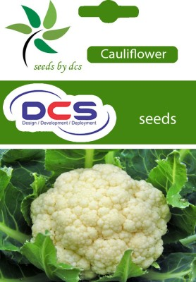 DCS Cauliflower (pack of 50 seed) Seed