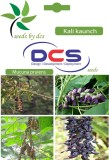 DCS Kali kaunch Forest Plant (10 Seeds P...