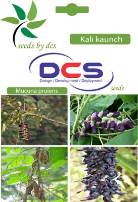 DCS Kali kaunch Forest Plant(10 Seeds Per Pack) Seed