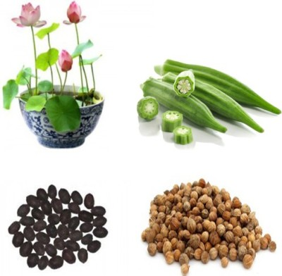 Alkarty lotus seed & lady finger seed combo Seed