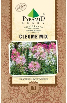 PYRAMID SEEDS Cleome Mix Seed