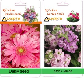 Alkarty Daisy and Stock mixed winter flower Seed(20 per packet)