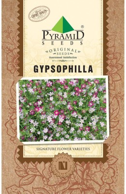 PYRAMID SEEDS Gypsophila Seed