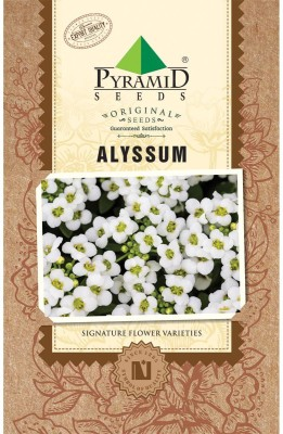 PYRAMID SEEDS ALYSSUM Seed