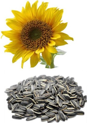 Alkarty Sunflower Seed(20 per packet)