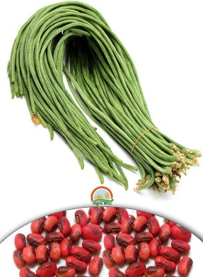 Agro Max Cowpea (Lobia) Export Quality Vegetable Seed
