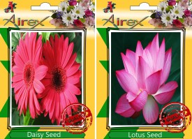 Airex Daisy and Lotus Flower Seeds (25 Per Packet) each Seed(25 per packet)