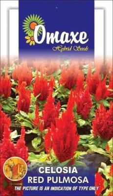 Omaxe CELOSIA RED SUMMER FLOWER SEEDS-AVG 100+ SEEDS BY OMAXE Seed