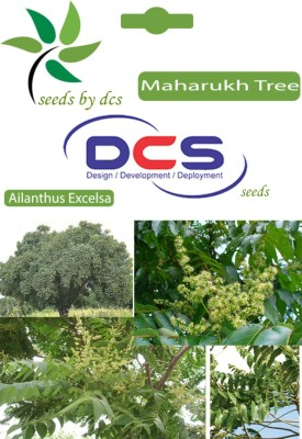 DCS Maharukh Forest Plant (5g Seeds Per Packet) Seed