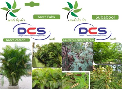 DCS Areca palm & Subabool (2 Packets of seeds) Seed