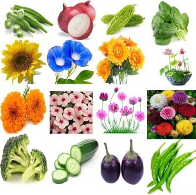 Alkarty lady finger,onion,spinach(palak) sunflower,morning glory,zinnia,lotus,sunflower,cosmos,vinca,broccoli,cucumber, green chilli,brinjal Seed