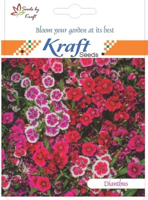 Kraft Seeds Dianthus Spring Beauty [Pack Of 2] Seed