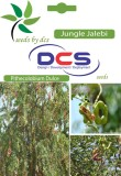 DCS Jungle Jalebi Forest plant (Per Pack...