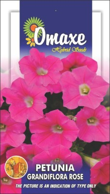 Omaxe PETUNIA GRANDIFLORA PINK -ROSE WINTER FLOWER 100 SEEDS PACK BY OMAXE Seed