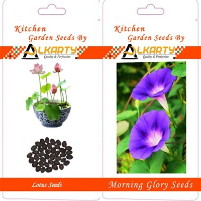 Alkarty Lotus And Morning Glory Seeds Seed