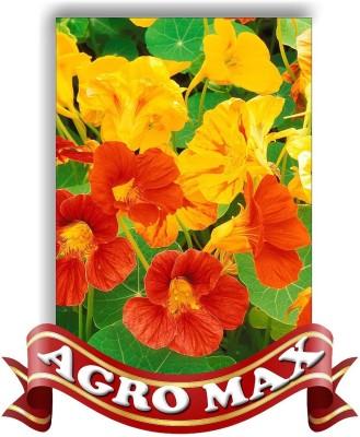 Agro Max NASTURSIUM SPECIAL MIX Seed