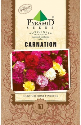 PYRAMID SEEDS CARNATION Seed