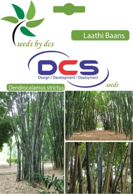 Dcs Laathi Baans Forest Plant (5g Seeds Per Packet) Seed