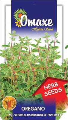 Omaxe OREGANO IMPORTED 30/40 SEEDS BY OMAXE Seed