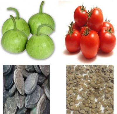 Alkarty tomato and tinda Seed