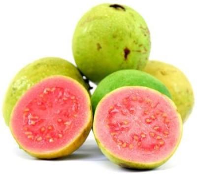SeedFactory Guava Seed