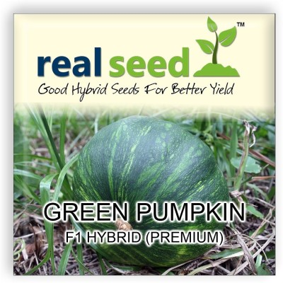 Real Seed Green Pumpkin F1 Hybrid Imported Seed