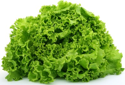 Farm Seeds HYBRID LETTUCE GRANDRAPID Seed(100 per packet)