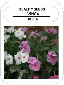 NeART Vinca-Rosia-NE-4 Seed(50 per packet)